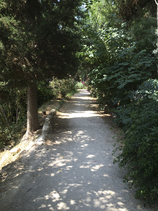 A shaded pathway near the site of the original Platonic Academy.