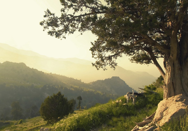 tuscan-tree-636-2